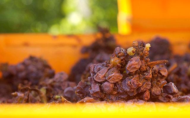 Заизюмленный виноград