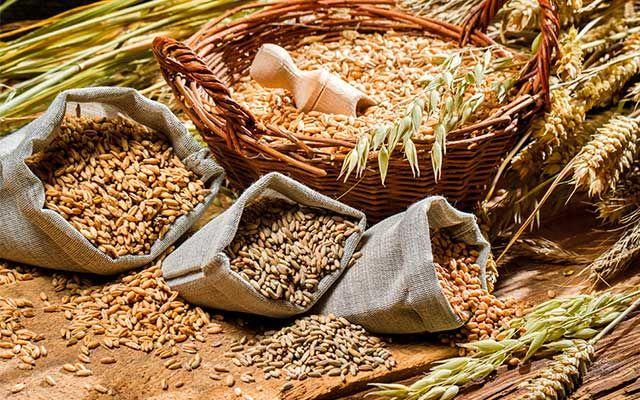 Пшеница для шнапса