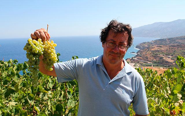 Органическое виноделие