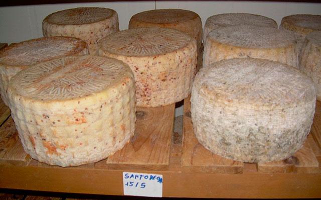 Изготовление сыра с червями