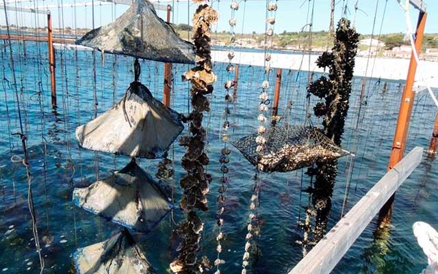 Музей моллюсков в Бузиге