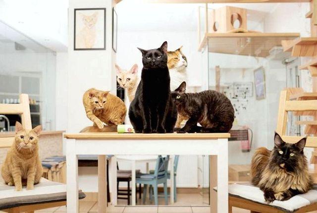 Кафе с кошками в Спб, фото